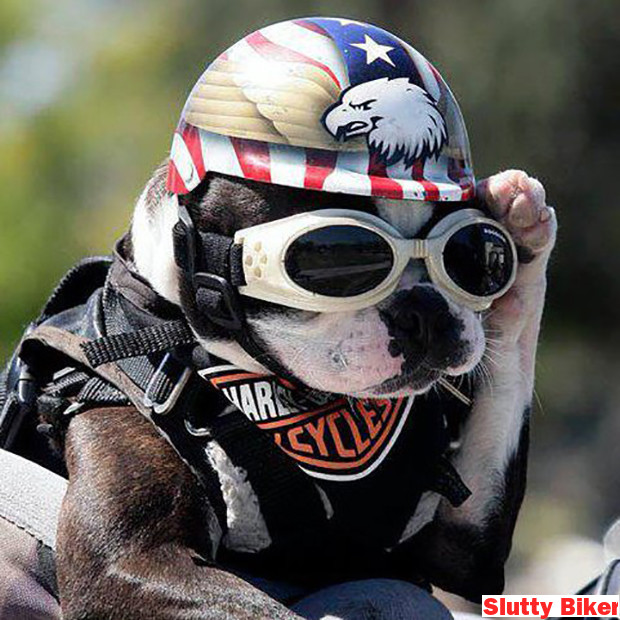 Slutty Dog Costumes Biker 021