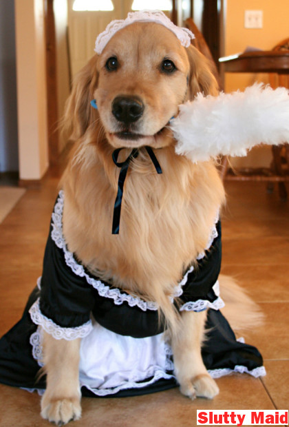 Slutty Dog Costumes Maid