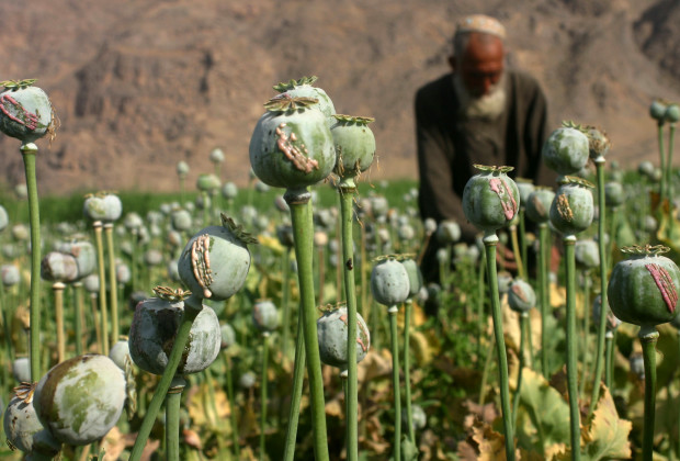 22 Apr 2013, Kandahar, Afghanistan --- (130422) -- KANDAHAR, April 22, 2013 (Xinhua) -- An Afghan man collects a raw opium from a poppy flower in a field in Kandahar, Afghanistan, on April 21, 2013. With producing 3,700 tons opium poppy in 2012, according to United Nations Office on Drug and Crime (UNODC), Afghanistan has topped the poppy producing nations. The government of Afghanistan has launched poppy eradication campaign in Kandahar recently. (Xinhua/Arghand) --- Image by © Arghand/Xinhua Press/Corbis