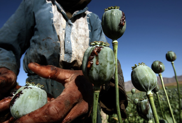 05 May 2009, Iran --- Afghan men harvest opium in a poppy field in a village in the Golestan district of Farah province, May 5, 2009. REUTERS/Goran Tomasevic (AFGHANISTAN CONFLICT) --- Image by © GORAN TOMASEVIC/Reuters/Corbis