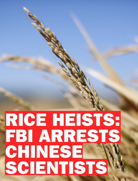 Rice Heists: Why the FBI Is Arresting Chinese Agricultural Scientists
