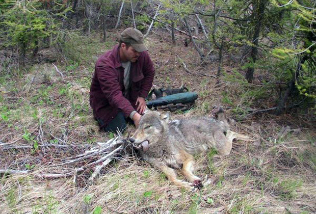 Tom White, Shelby's father, poses with an endangered wolf he shot and killed back in 2008.