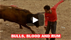 Bulls, Blood and Rum