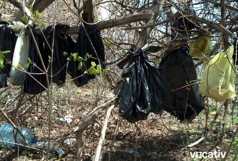 http://media.vocativ.com/photos/2014/04/Dead-Cats-In-A-Tree-011937577303.jpg