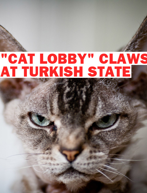 "Turkey's ""Cat Lobby"" and Other Imaginary Foes Claw at the State"