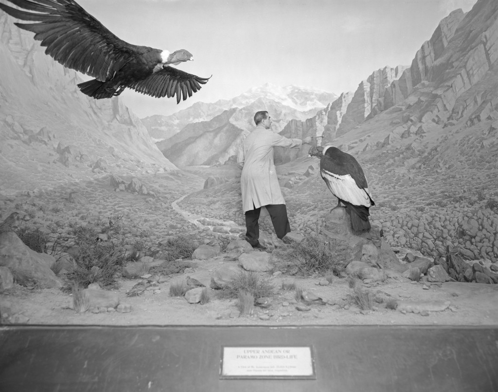 The American Museum of Natural History's Temples of Taxidermy, Then and Now