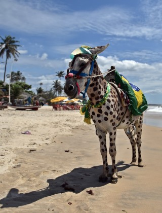 Donkeys: Brazil's Newest Delicacy?