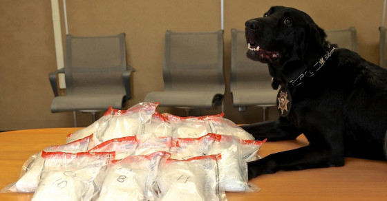 These Drug-Sniffing Police Dogs Are Absolutely Adorable