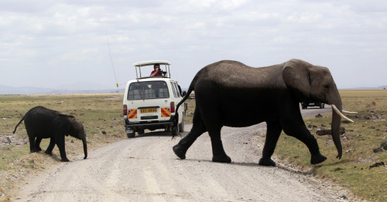 This Is What Happens When an Elephant Hears an Air Raid Siren