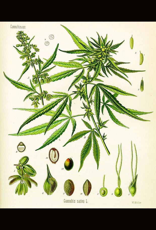 Medical Marijuana_01