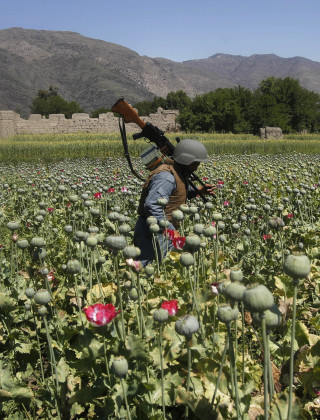 Drugs, Pakistan Fuel One Bloody Afghan Summer