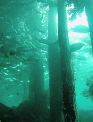 Plans to Clear-Cut the Largest Underwater Forest Spur Fear, Relief