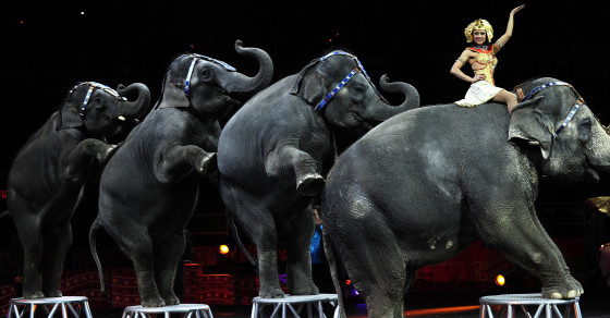 The Numbers Behind Ringling's Disappearing Elephant Act