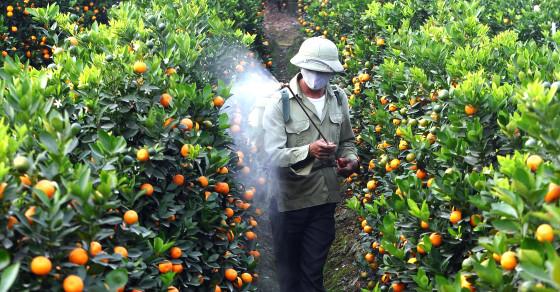 Pesticides May Be Killing Off Your Sperm Vocativ