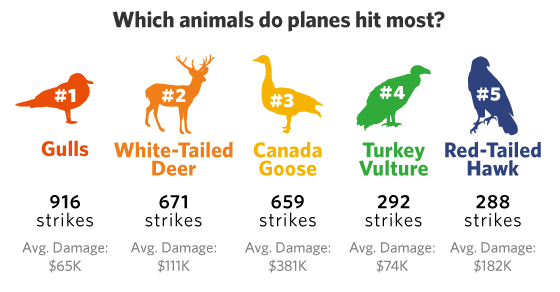 The Birds (And Deer) Behind Thousands Of Airplane Emergencies