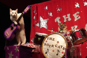 The Scientific Quest To Make Music For Cats