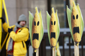 Leading Anti-GMO Researcher Accused Of Scientific Fraud