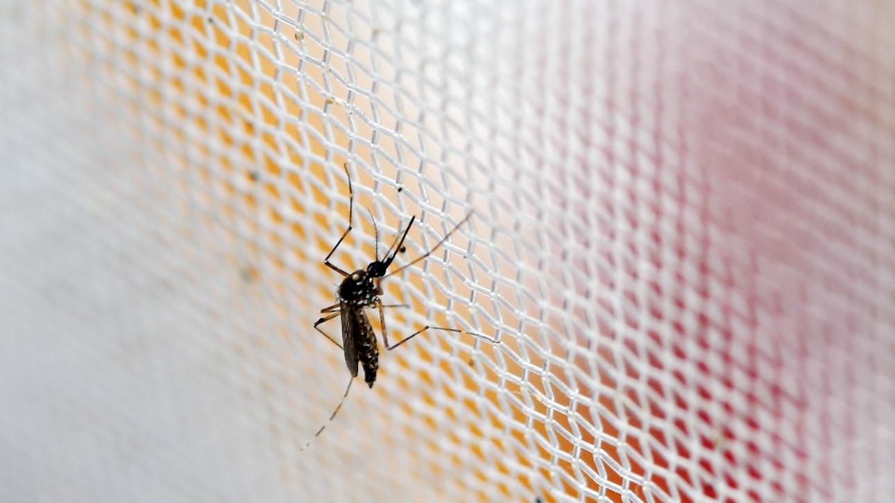 Adakah Benar Virus Zika Adalah Satu Konspirasi
