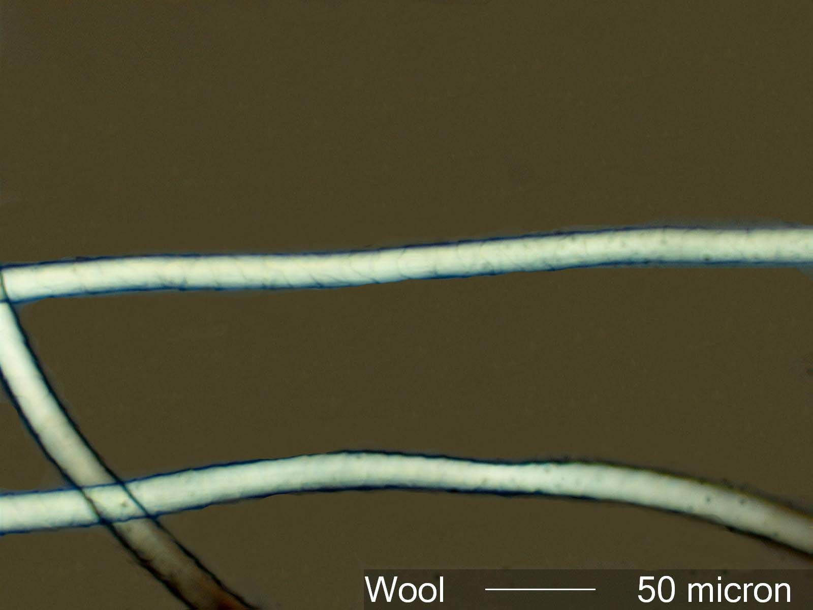 Wool7Adfixed