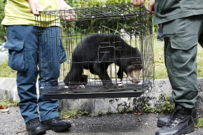 Facebook Groups Drive Illegal Wildlife Trade In Malaysia