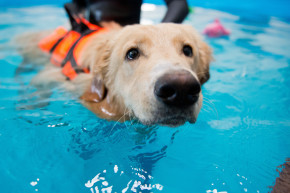 Therapy Dogs Team Up With Olympic Swimmers