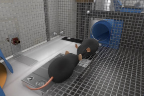 Mouse-Only Space Station First Step To Colonizing Mars