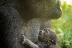 Alas, Philly Zoo's Baby Gorilla Will Probably Not Be Named 'Harambe'