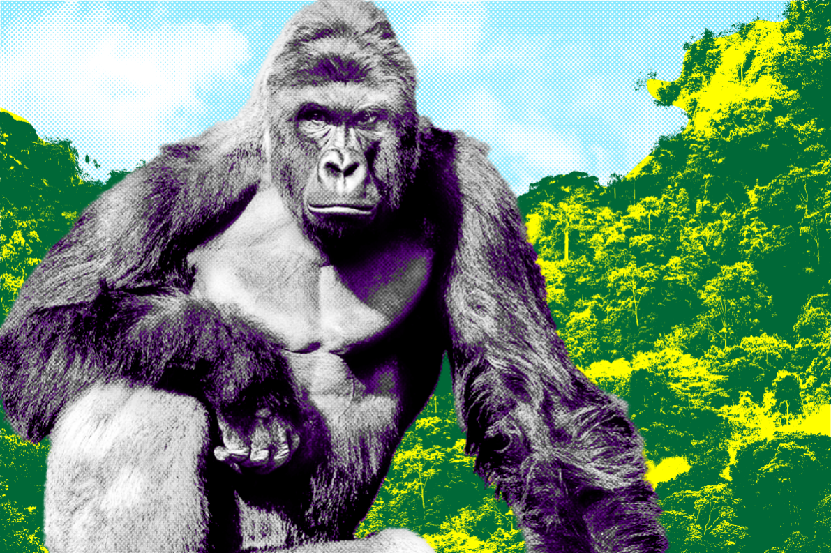 Harambe Will Live Again As A Music Festival Hologram Vocativ
