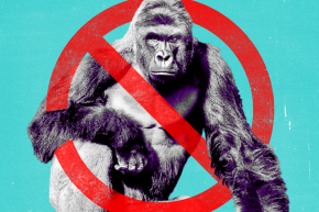 Clemson University Bans Harambe From Its Dorms