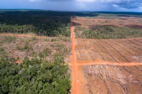 Drones, Satellites Map One Company Destroying Virgin Forest