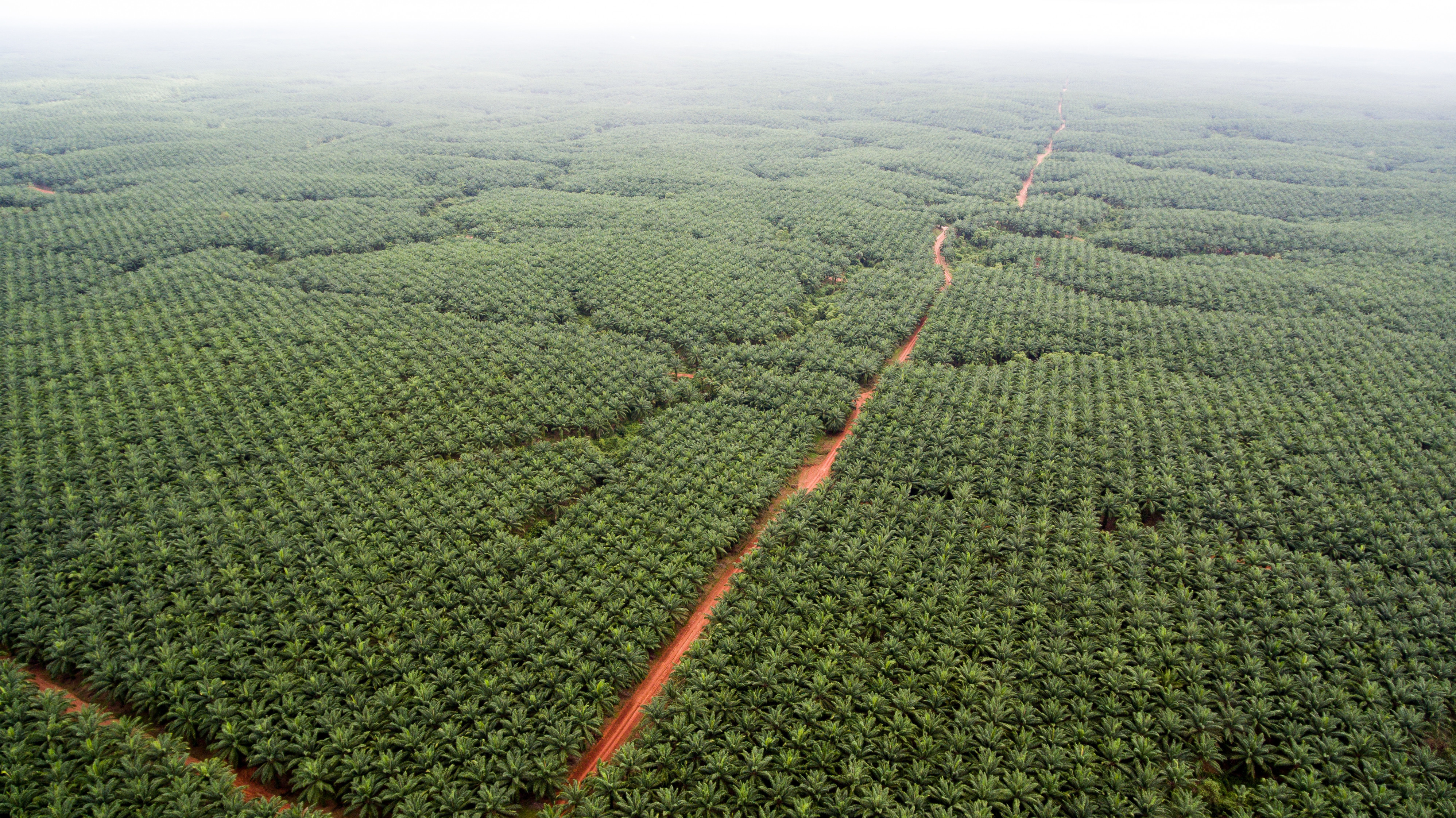 OVERLAYS OIL PALM CONCESSIONS OWNED BY PT TUNAS SAWAERMA TAKEN FROM HEIGHT