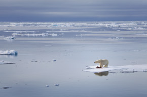 Climate Change Could Melt All The Arctic Ice By 2045