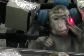 Monkeys Are Just As Vain As Humans