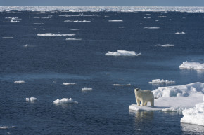 Record Low Arctic Sea Ice This Winter Is One More Sign Of Trouble