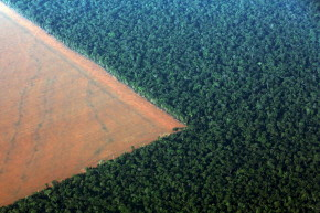 Companies Promise To Stop Deforestation. Are They Lying?