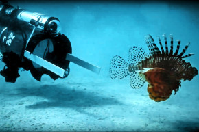This Robot Hunts Invasive Lionfish