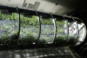 This Inflatable Greenhouse Was Built For Mars