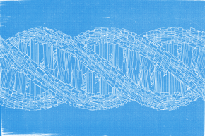 Scientists Working To Build A Human Genome Struggle With Transparency