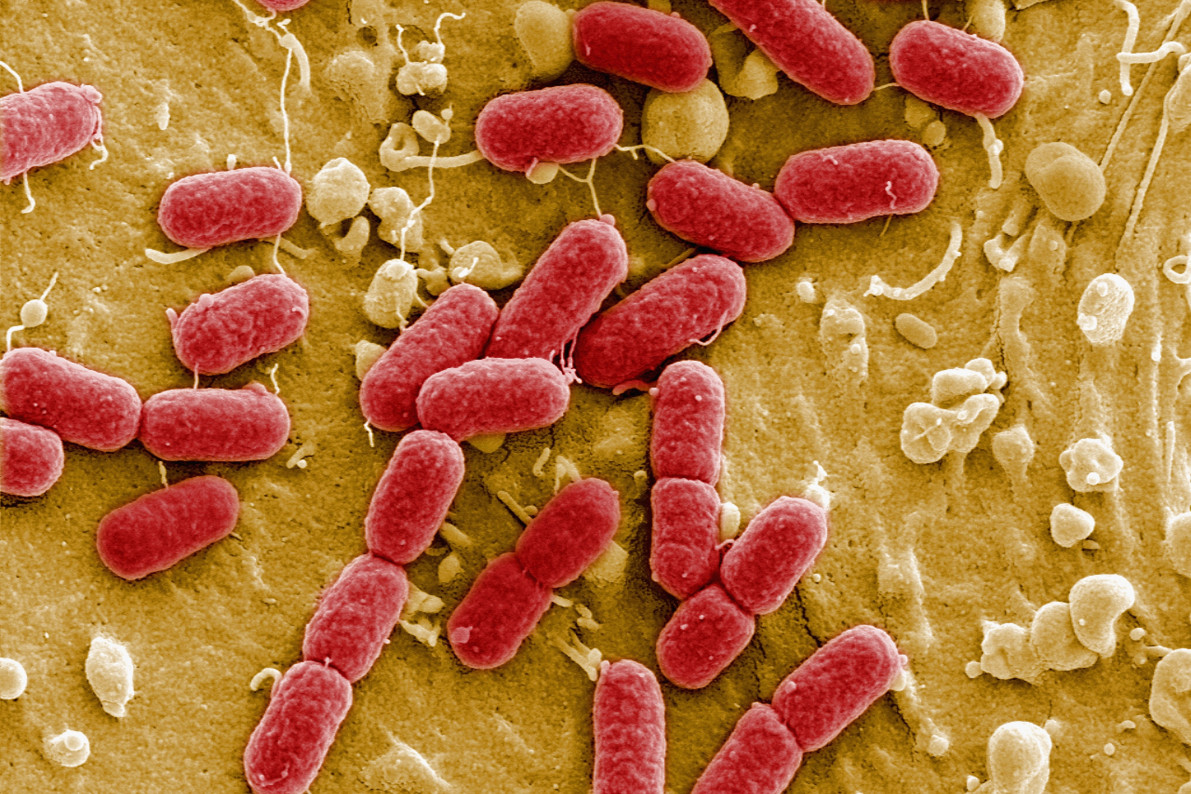 'Magical' antibiotic vancomycin modified to improve potency against bacteria