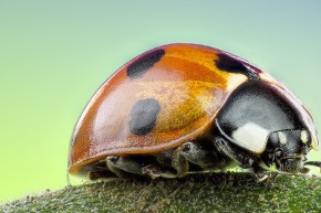 How Ladybugs Can Influence Future Technology