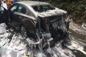 Slime Eels Cause Four-Car Pile-Up In Oregon