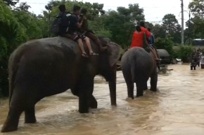 Rescue Elephants Carry Hundreds To Safety In Nepal Flood