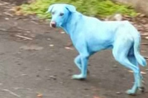 Dogs In This Indian Township Are Turning Blue