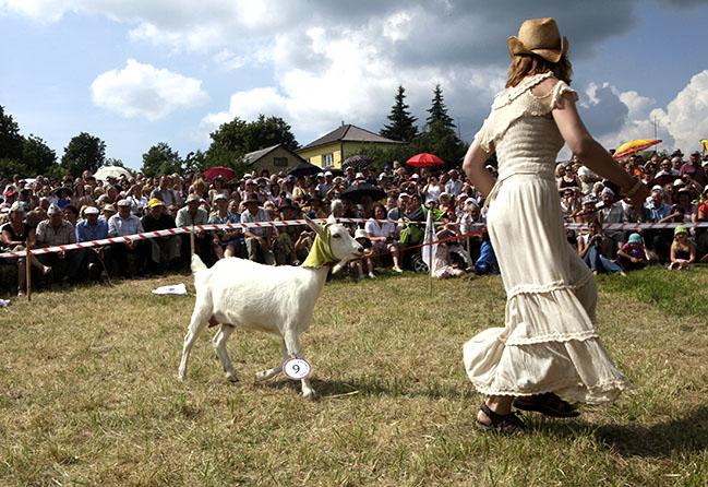 2010 goat beauty pageant in Ramygala, Lithuania
