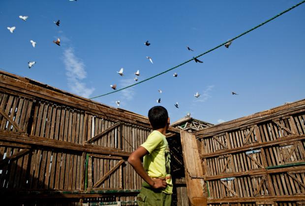 Pigeon Breeders 09