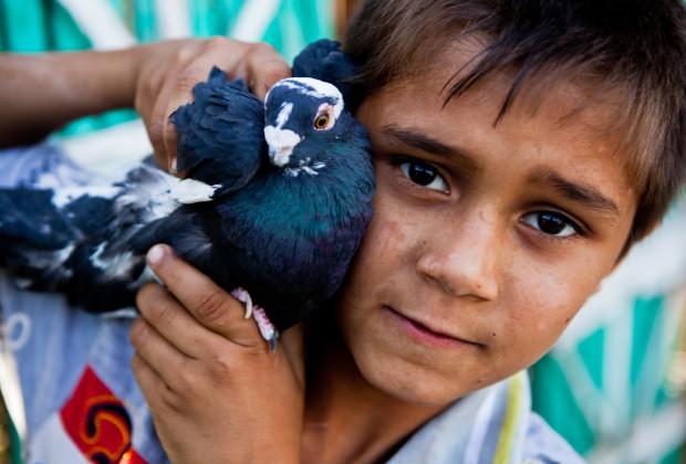 Pigeon Breeders 13