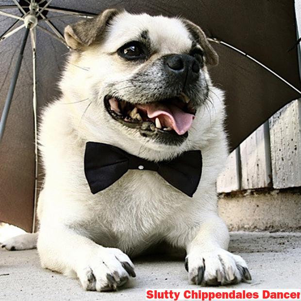 The 10 Sluttiest Doggy Halloween Costumes