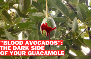 Avocado Wars_Poster214