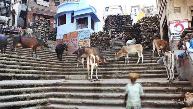Varanasi Cremation 05