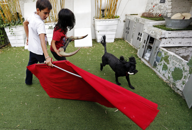 Solal (L), 12, and Nino, 10, both toreador apprentices of the French Tauromachy Centre Bullfighting School, joke with a muleta, a small cloth attached to a short tapered stick and used by a matador, at Solal's house in Nimes, southern France September 25, 2013. Since 1983, the French Tauromachy Centre in Nimes has trained some 1,000 youths in the art of bullfighting. Twenty of them have gone on to become professional matadors, facing fighting bulls in the arena. Twice a week, students take courses with a matador to learn the movements and gestures of the bullfighter in the ring, but without an animal present. Students train with calves in the surrounding fields during spring, and regularly participate in beginner's bullfights (becerradas) without killing calves. Solal has been taking courses for three years and Nino, for just a year now. Both are normally enrolled in French public schools, but have one thought in mind - bullfighting. They share a passion linked to the city of Nimes, famous for its ferias and bullring. Picture taken September 25, 2013. REUTERS/Jean-Paul Pelissier (FRANCES - Tags: EDUCATION ANIMALS SOCIETY)  ATTENTION EDITORS: PICTURE 01 OF 21 FOR PACKAGE 'FRANCE'S BOY BULLFIGHTERS'. TO FIND ALL IMAGES SEARCH 'TAUROMACHY' - RTX14ZGM